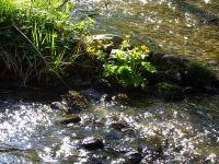 30_Morgensonne_spielt_mit_Perlbachwasser_-_dem_Wasser_des_Bogenbaches