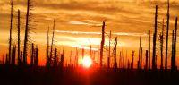 12-Polednik---fast-irreal-der-Sonnenaufgang-zwischen-den-Baumgerippen--ft