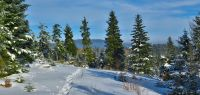 131-feb-18-tiefverschneiter-Wald-am-Kaitersberg-bm