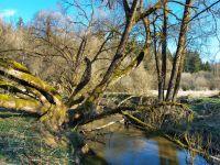 006_Natur_Natur_sein_lassen_am_Perlbach_ft