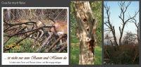 31-Totholz-bietet-Tieren-Lebensgrundlage
