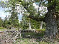 059_Spagat_zwischen_Natur-Natur-sein-lassen_und_Nutzung
