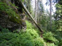 026-Urwaldgebiet-Arberseewand---ft