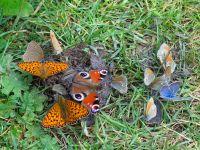 058-Artenvielfalt-der-Moldau-Auwiesen---bm