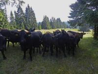 064-Im-ehemaligen-Scheuereck-wird-heute-naturnahe-extensive-Weidewirtschaft-betrieben---ft