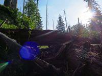 089-Rachelgebiet---Ort-der-dem-Urwaldbegriff-am-meisten-entspricht---bm