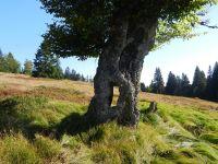 101-Baum-mit-Durchblick-am--Jaehrlingsschachten---ft