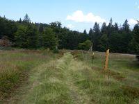 132-Mitte-August-werden-die-Rotrinder-erstmals-vom-Ruckowitz-zum-Hochschachten-umquartiert---ft