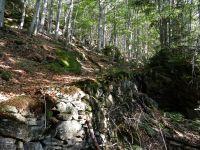 133-Einer-der-noch-gut-begehbaren-alten-Trockenmauerwege-im-Falkensteingebiet---ft