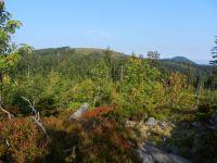 164-Enzian-und--Schwarzeck-von-Wanderweg-in-Richtung-Enzian---ft