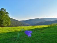 018-Ausblick-mit-Glockenblume-von-Mitterwaid-Predni-Paste-bers-Kremelnatal-im-Sumava--bm