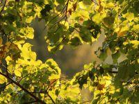 022-Fruehherbstliche-Verfaerbung-im-Sumava---bm