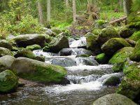 028-Wydra-im-Nationalpark-Sumava---bm