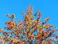 030-Herbst-in-seiner-vollen-Pracht---ft