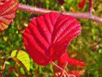 079-Herbstimpression-Proeller---bm