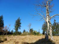 080-der-Stelzenbaum-am-Scheuereckberg---dem-Gipfel-des-Jaehrlingschachtens---ft