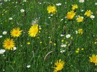 004-Blumenwiese-in-Mitterfelser-Garten-cbw